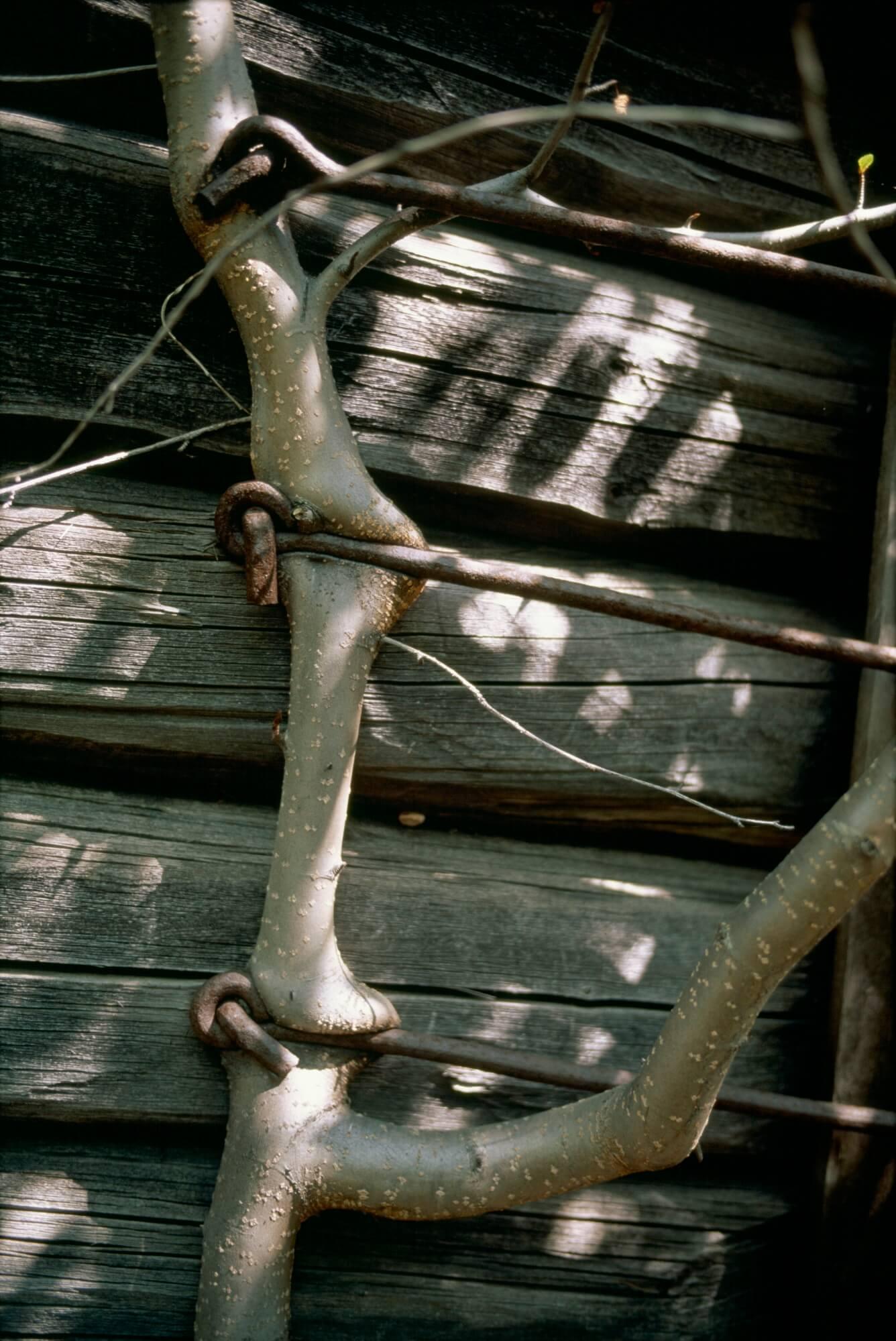 Fédération de Russie, Camp 507, Cap Nevelsky, 1999. - © Reza