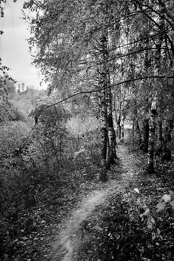 """""""Forêt urbaine"""", Moscou, 2014"""